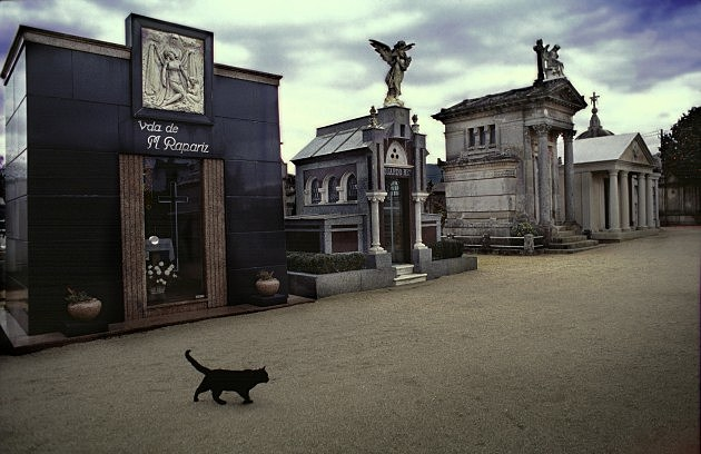 Black cat walking in the cemetery - Miguel Palacios/Cover/Getty Images