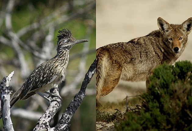 Roadrunner/Coyote - Getty Images
